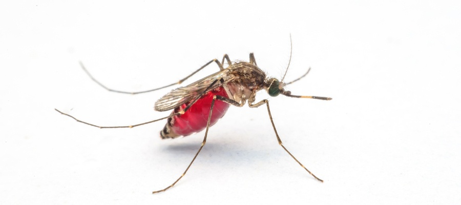 How to Prevent Insect Issues for Outdoor Workers